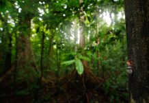tropical peatland conservation, COVID-19