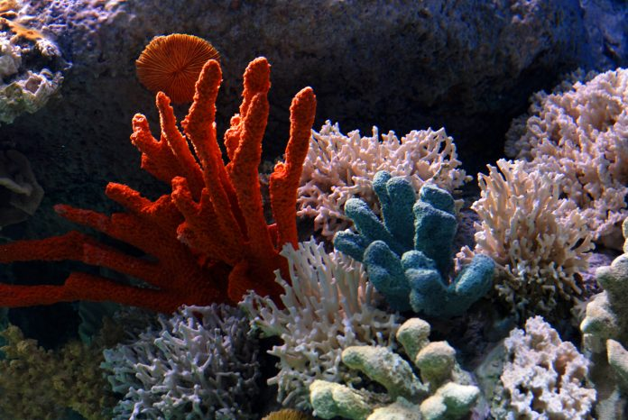 protect coral, conservation