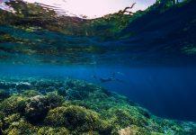 deep biosphere, deep ocean