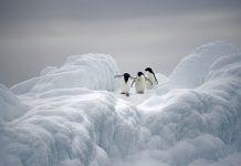 sea ice decreases, ICE2ICE