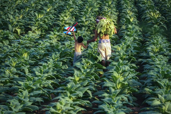 multinational land deals, food security