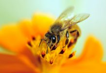 plant diversity, bee conservation