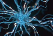 unpredictable stress, neuron