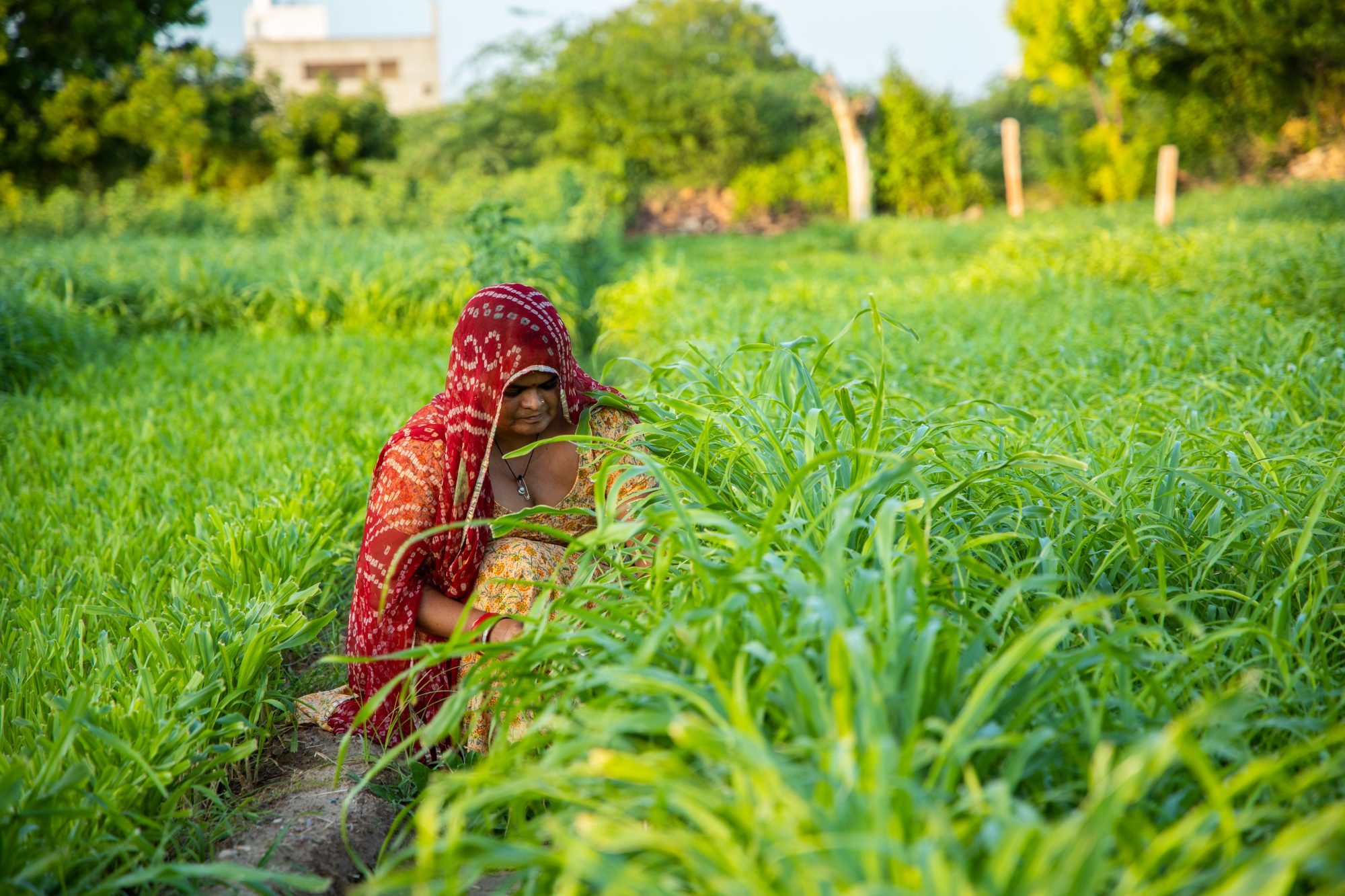 controversial agricultural reforms, modi