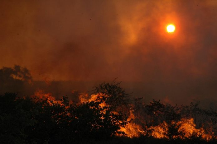 the impact of wildfires, trees
