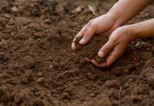sustaining soil health