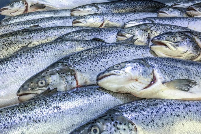 farmed salmon and trout, delousing