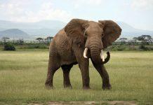 elephant coexistence, elephant