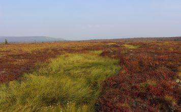 arctic tundra vegetation, earth and life