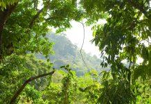 natural disturbance, forest