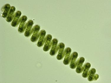 spirulina biomass, spiralG