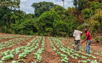 african food security