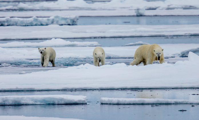 Arctic environmental data