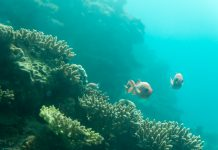absorb greenhouse gases, seafloor