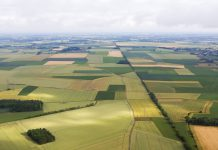 sustainable agriculture post-pandemic