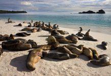 safeguarding galapagos