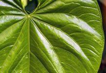 amazon rainforest carbon, degradation carbon