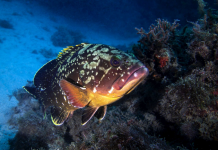 overfishing marine protected areas, edge effect