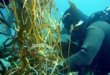 marine biodiversity, environmental DNA