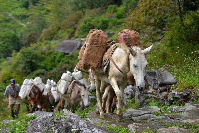 enablers of food security