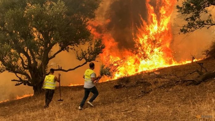 wildfires northern algeria, climate
