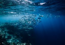 marine protected areas fish, MPA