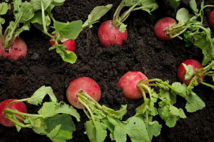vegetable crop protection, Inagro