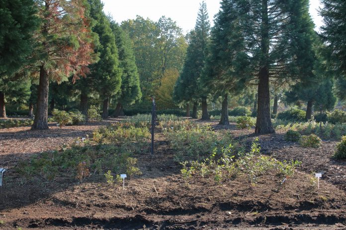 agroforestry and mixed farming