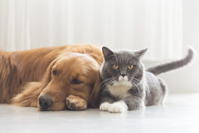 therapies for cats